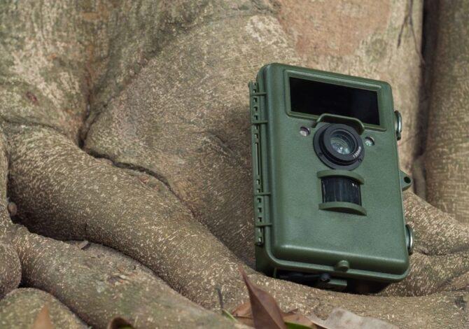 Come fotografare la fauna selvatica con una fototrappola?